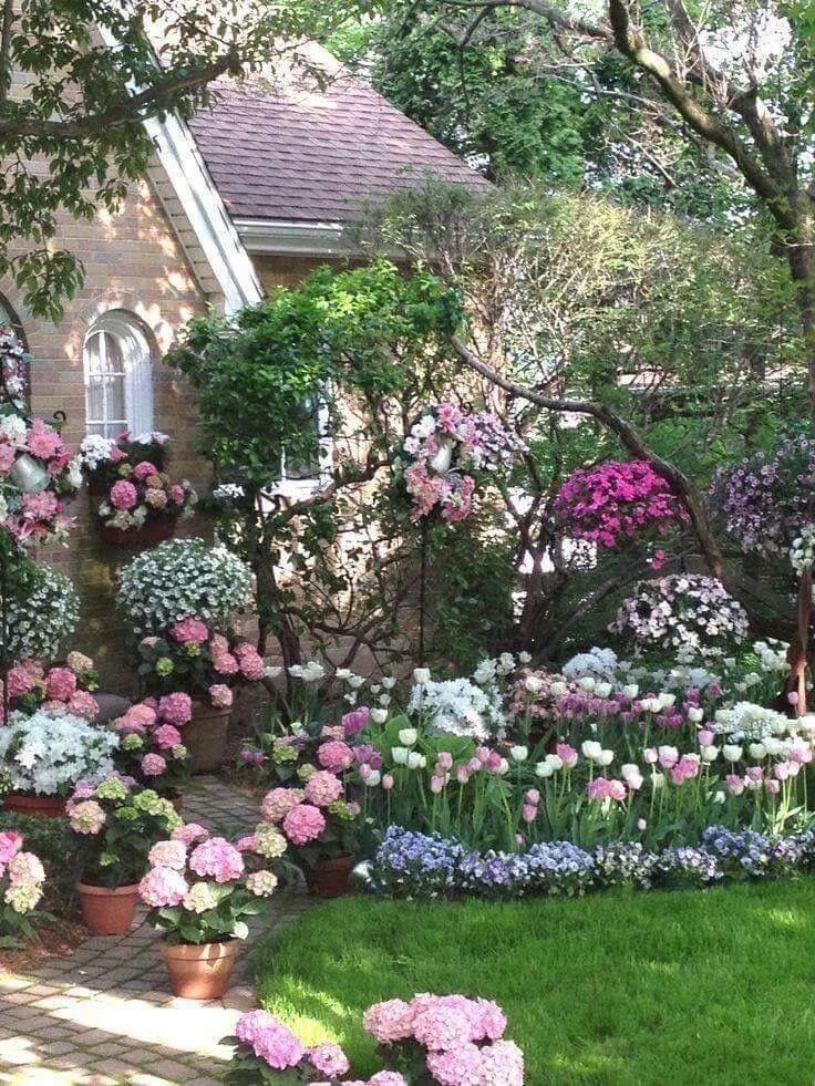 rosas e outras flores