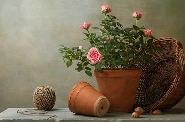 composições artísticas com rosas