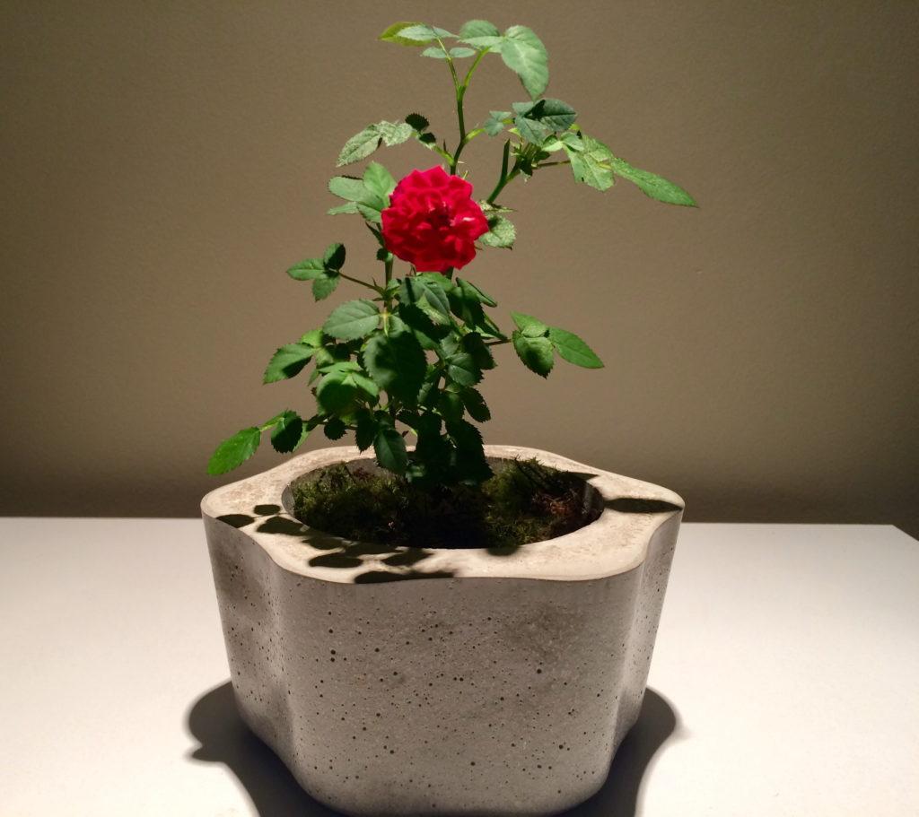 mini rosa vermelha
