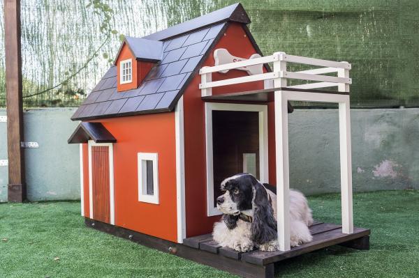 quintal com casa para cachorro