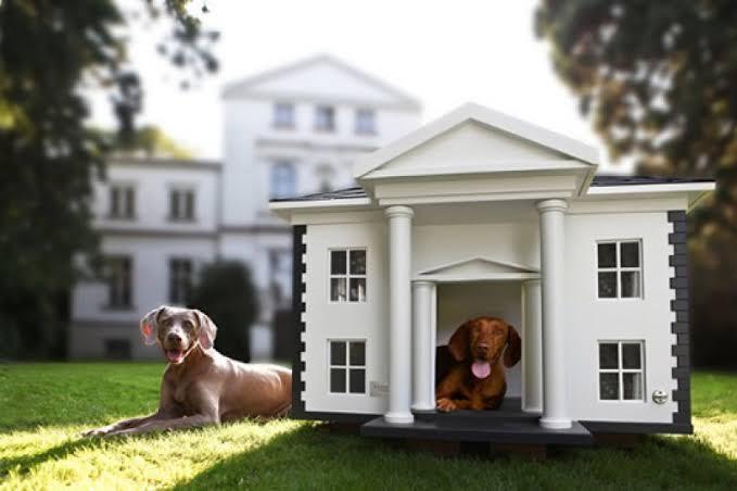 mansão para cachorro