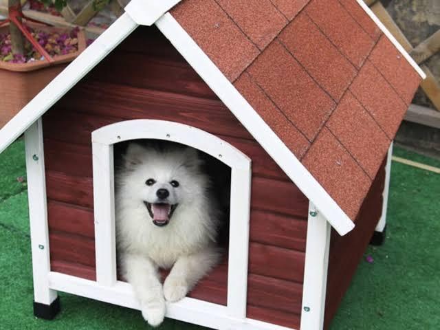casinha de cachorro pequena