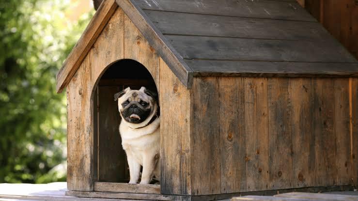 casa rústica para cachorro