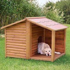 jardim com casa de cachorro