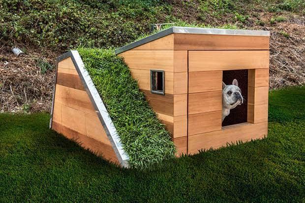 casa sustentável de cachorro