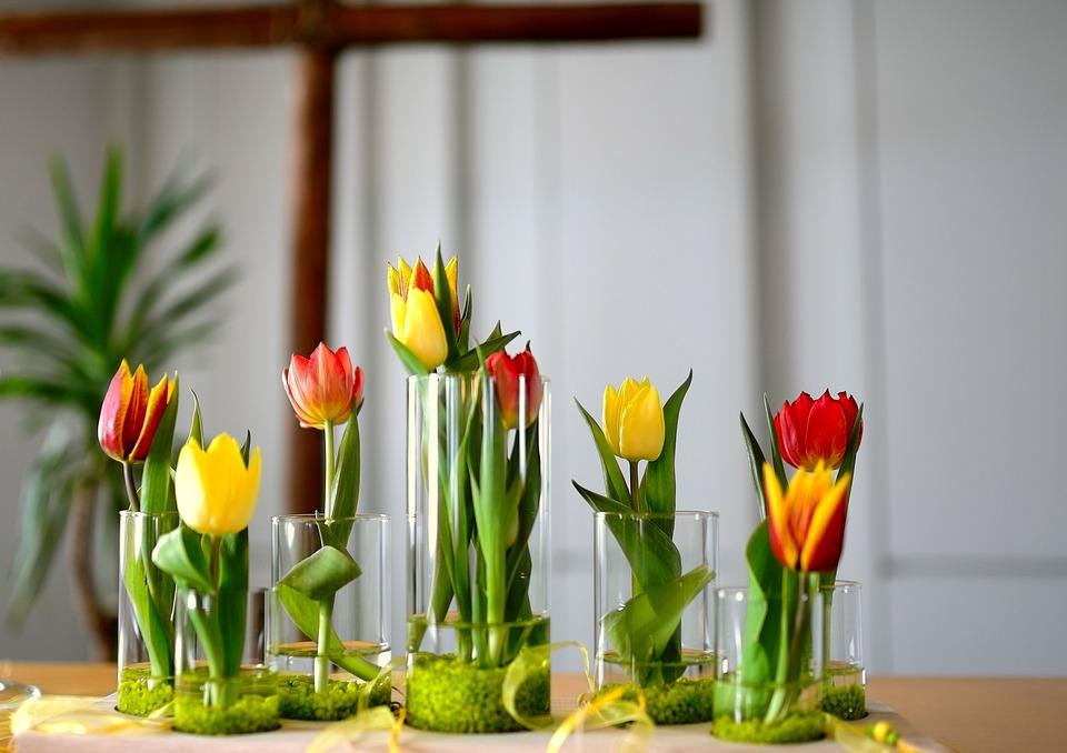 como cuidar de tulipas em vasos