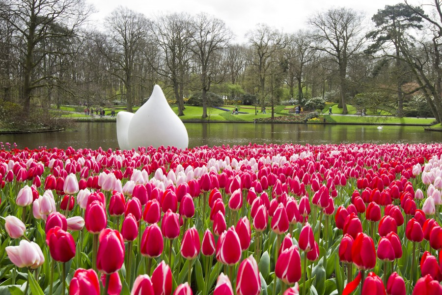 jardim de tulipas na Holanda