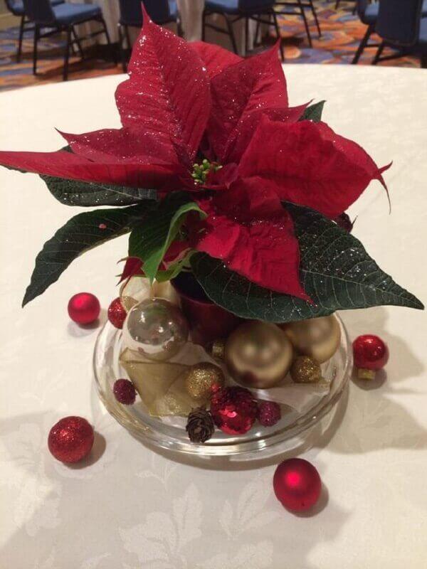 plantas natalinas
