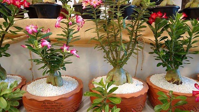 composição de vasos