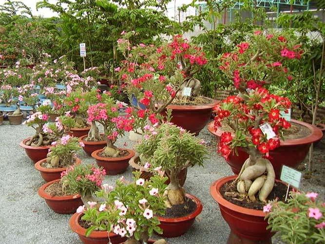 várias cores e tamanhos de plantas