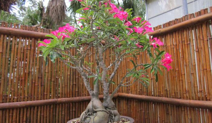 jardins naturais