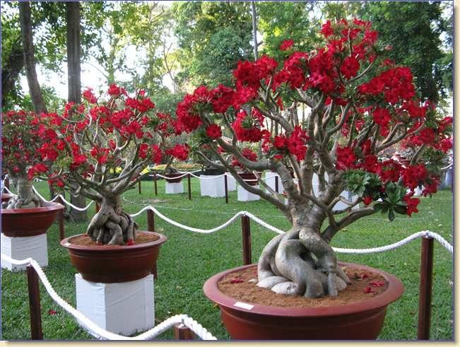 caminho com flores e vasos