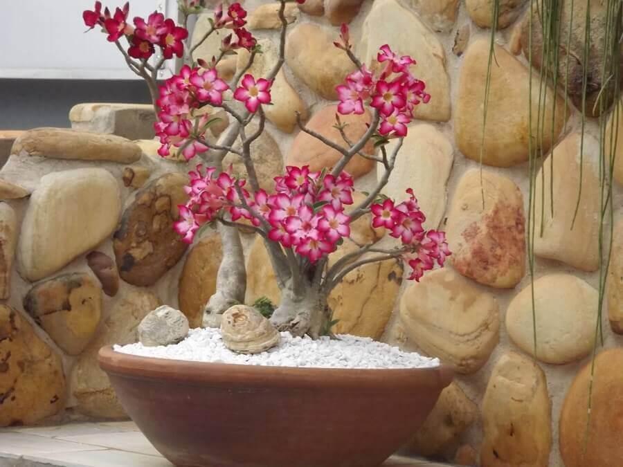 plantas para decoração de cascatas