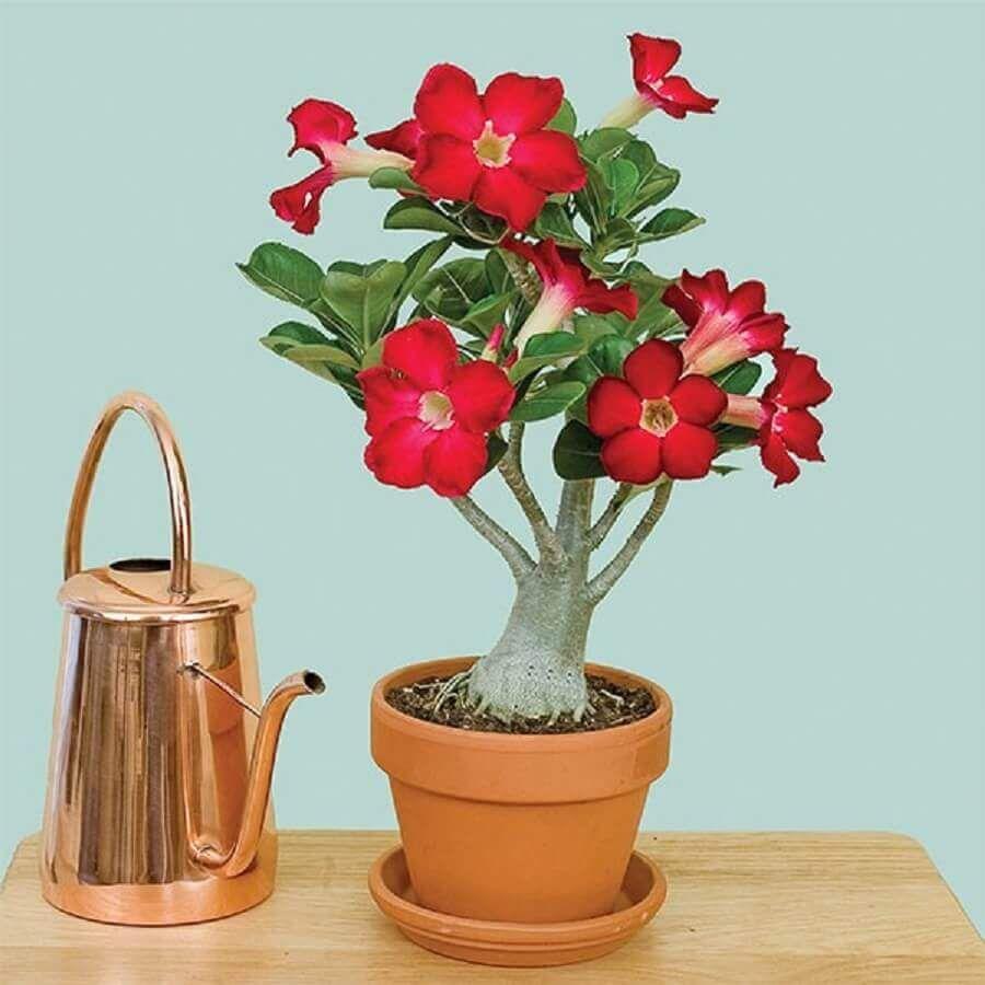 rosa do deserto para decoração