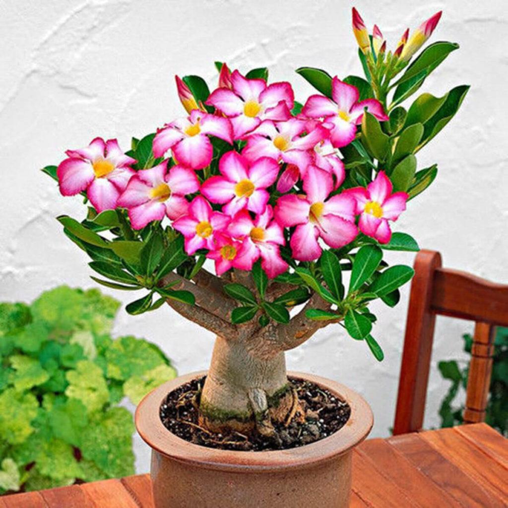 vaso decorativa na mesa