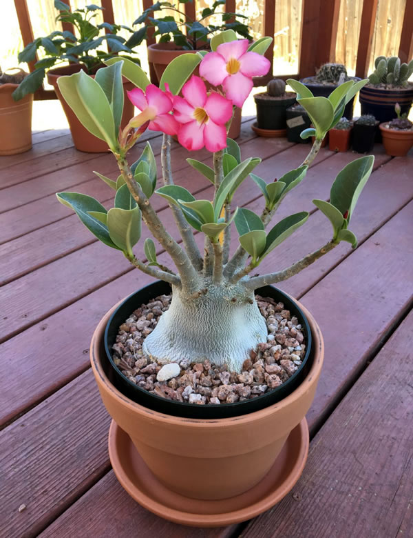 decoração externa com plantas