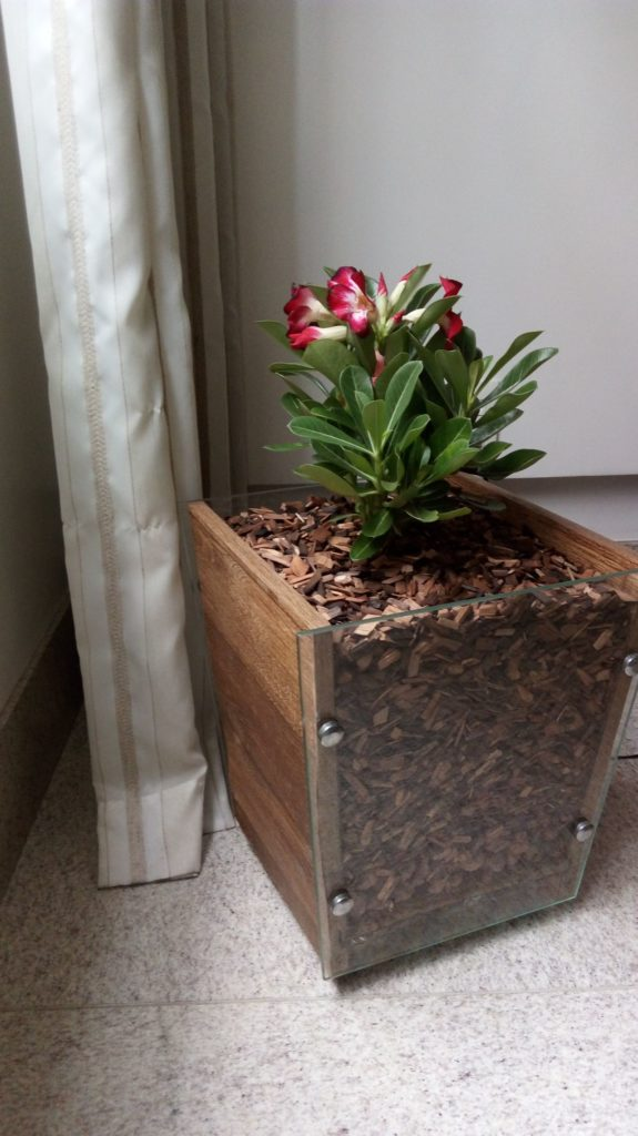 decoração com plantas internas