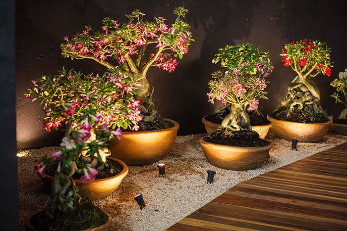 jardim com iluminação