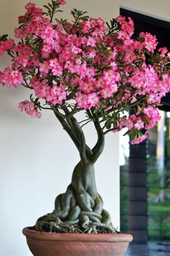 rosa do deserto decoração interna