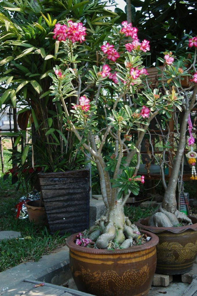 vaso decorativo para jardim