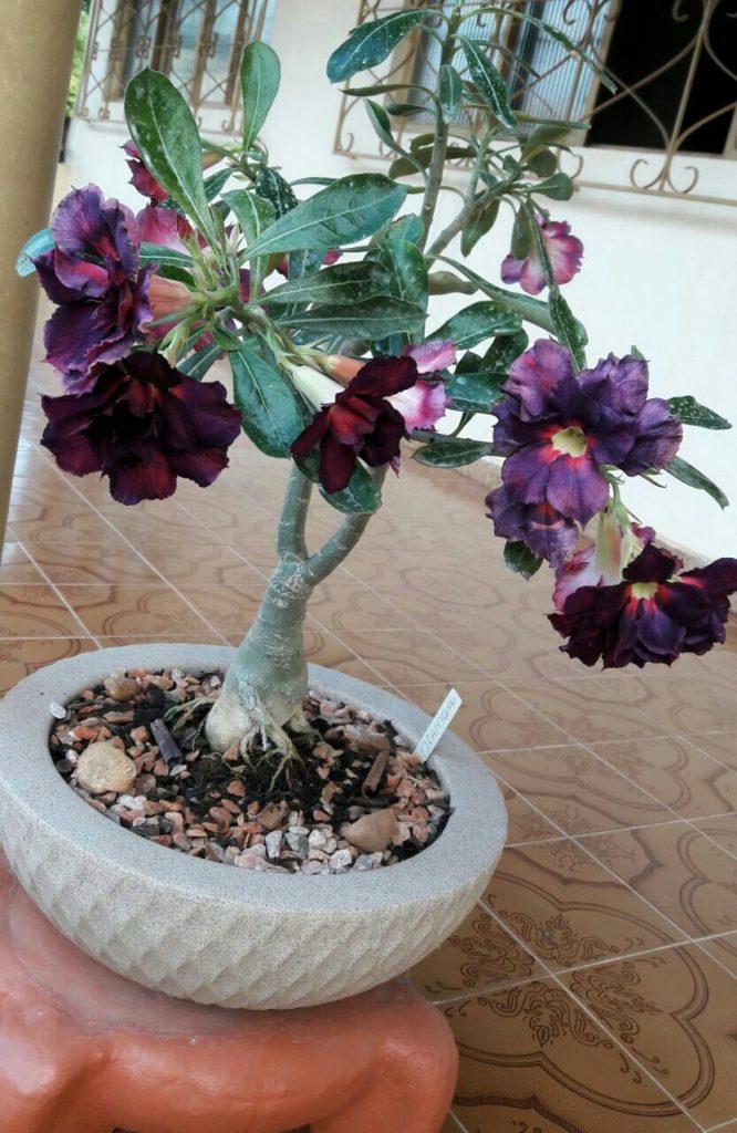 flor para decorar varanda