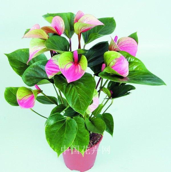 cores diferentes na planta