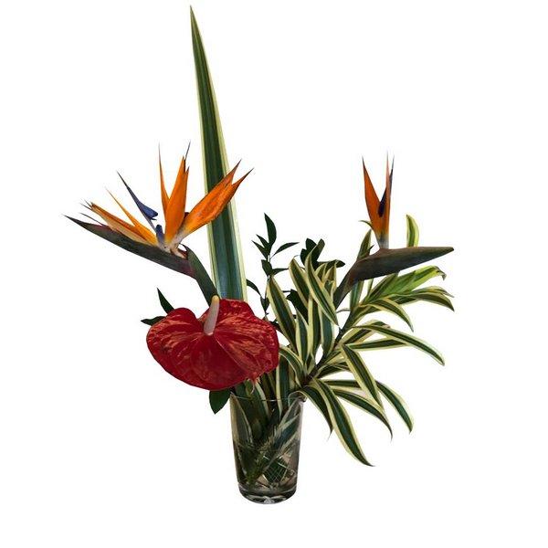 decoração com outras plantas