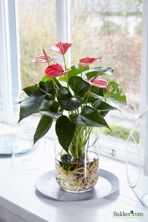 vaso na janela