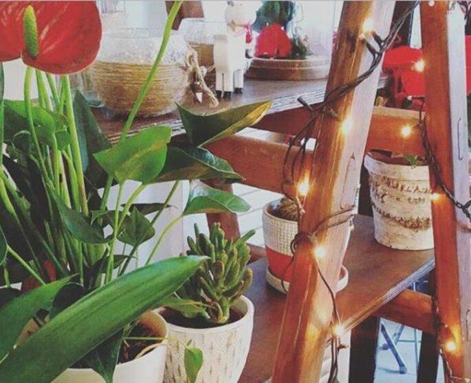 cantinho decorado com plantas