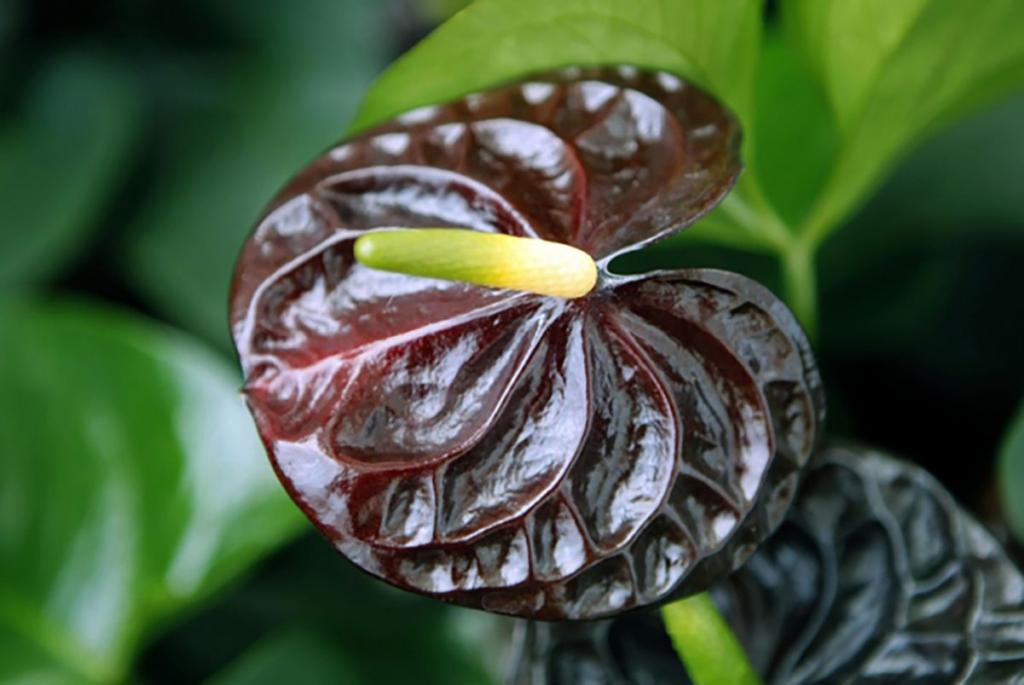 cores diferentes para plantas