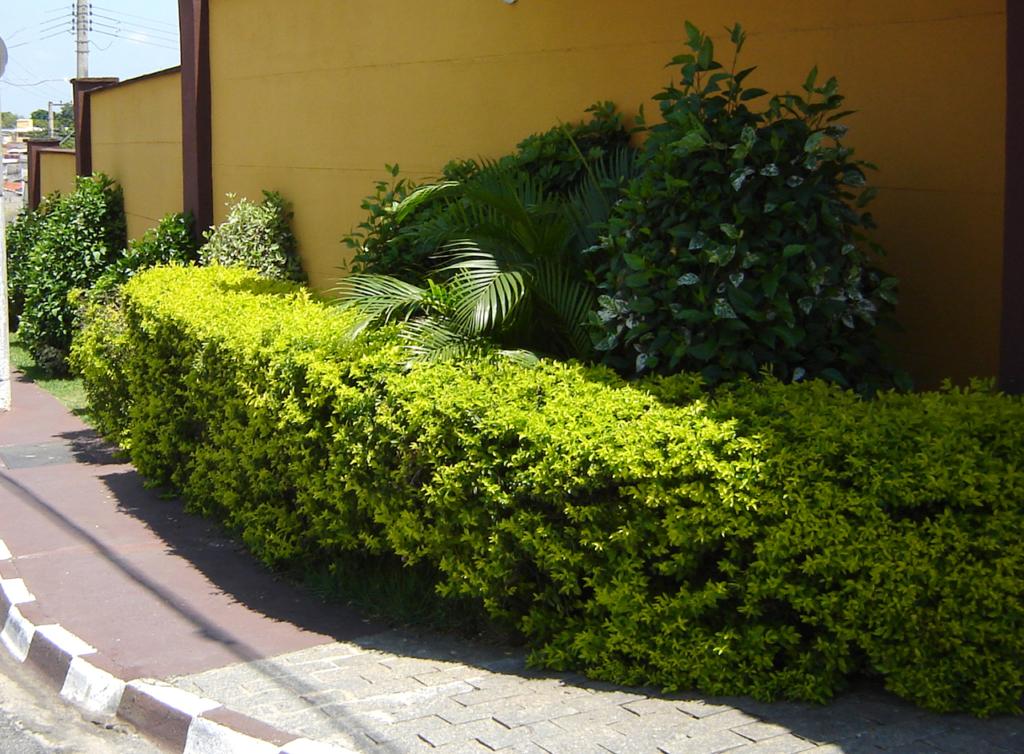 mistura de plantas
