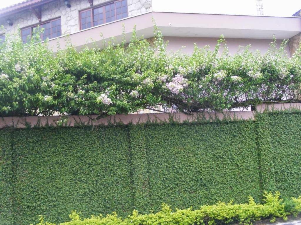 muro revestido com trepadeira