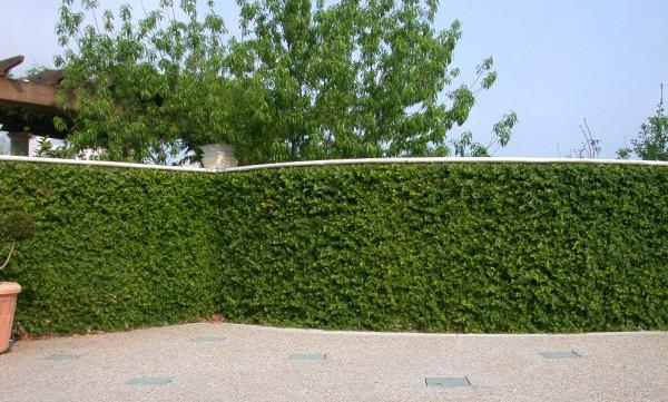 muro revestido naturalmente
