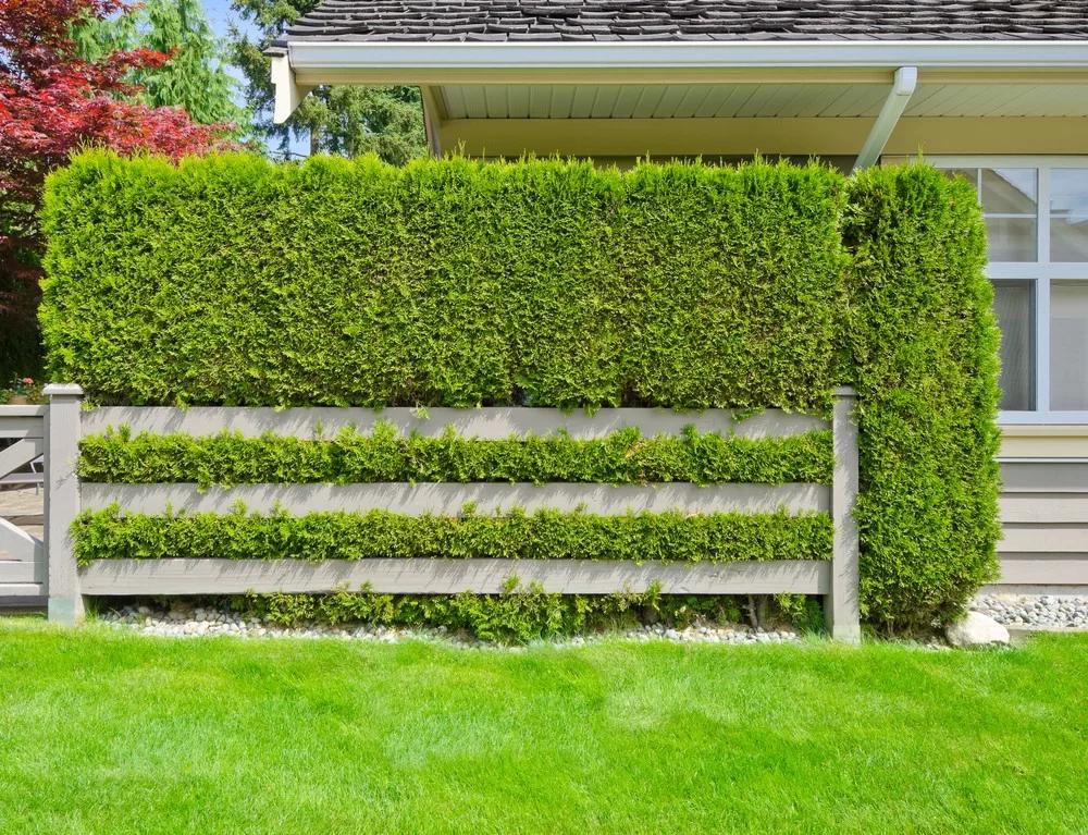 cerca verde na fachada