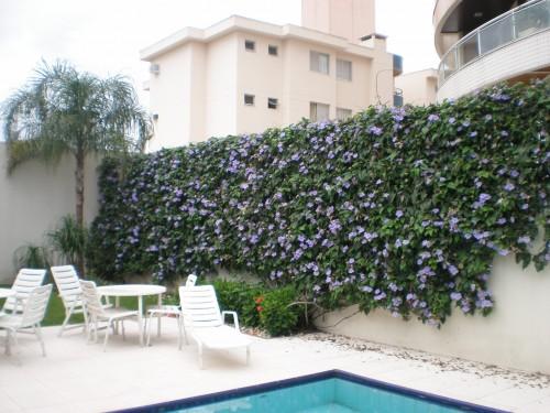 muro coberto de plantas