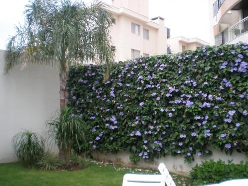 muro de cerca viva