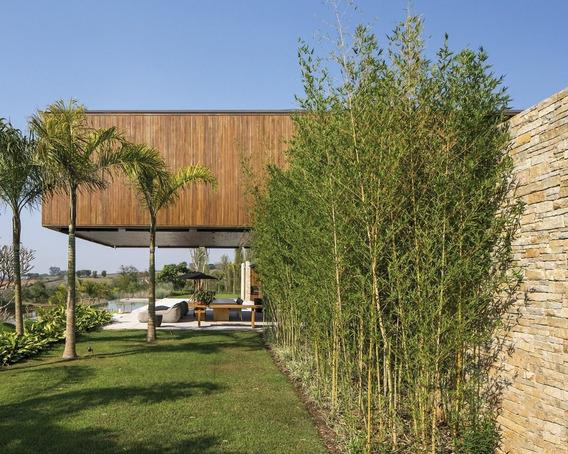 bambu para muro natural