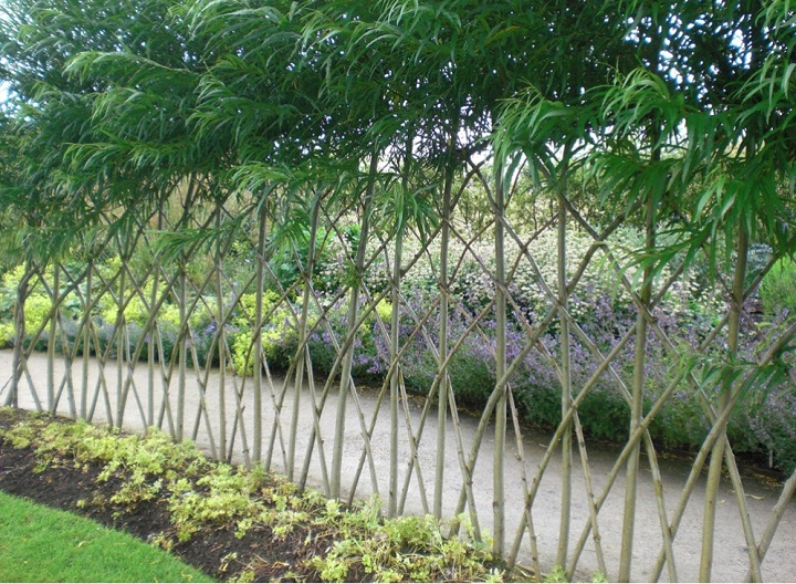 bambu decorado
