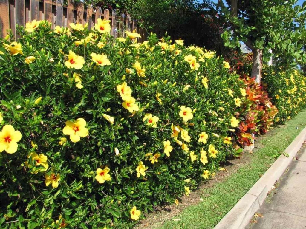 muro com flores