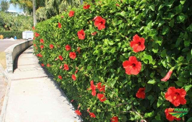 flores decorativas para cerca viva
