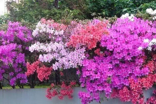 plantas de várias cores