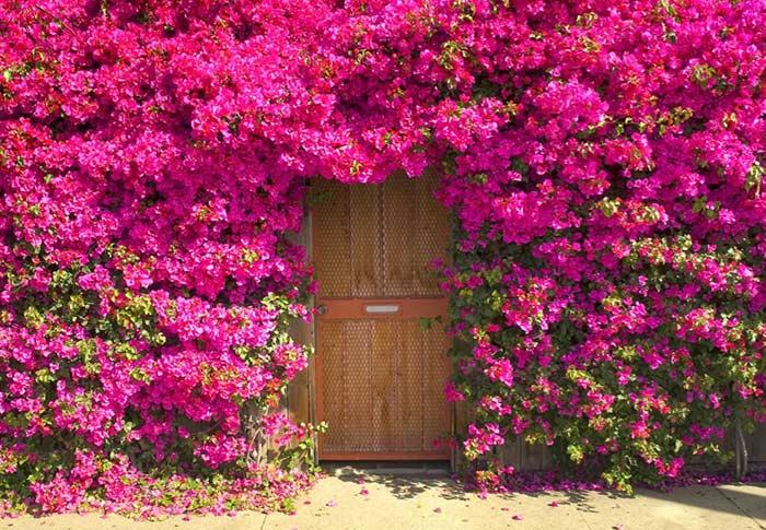 portais de flores