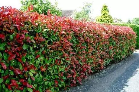 cerca viva com plantas verde e vermelhas