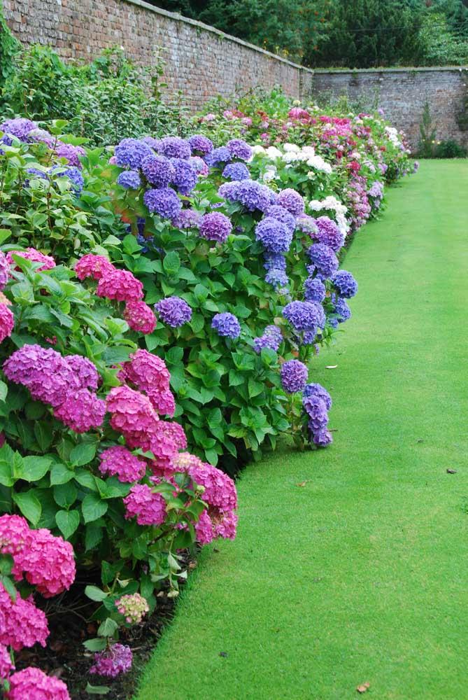 flores cobrindo o muro