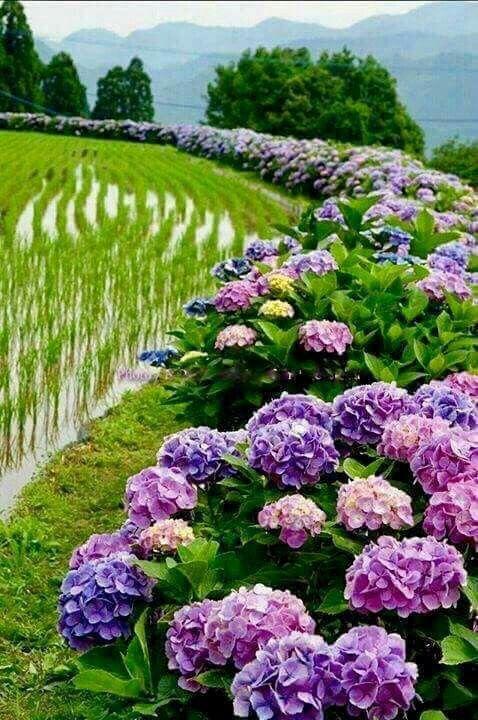 flores rodeando o lago