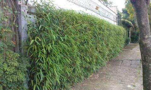 cerca com bambu