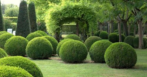desenhos com plantas
