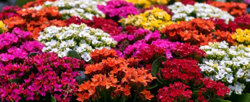 diversas cores