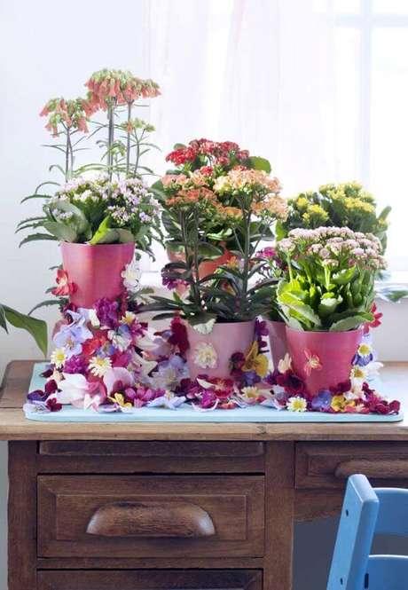 diversas plantas e cores
