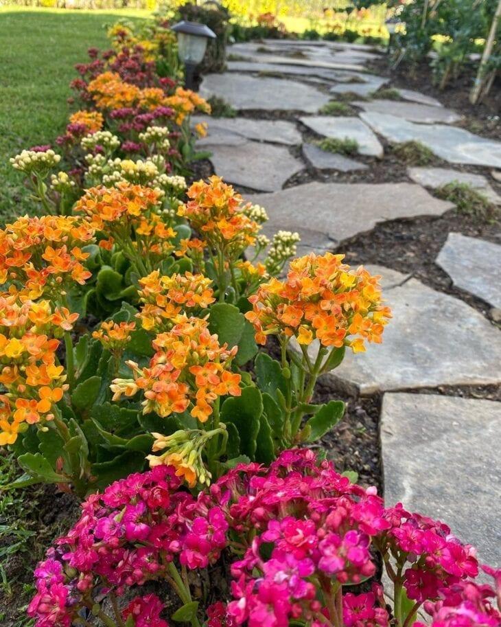 flores no caminho